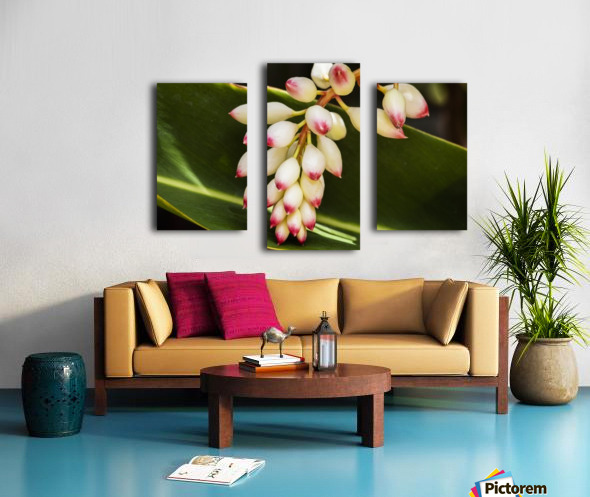 Close-up of white ginger flower Alpinia; Maui, Hawaii, United States of America Canvas print