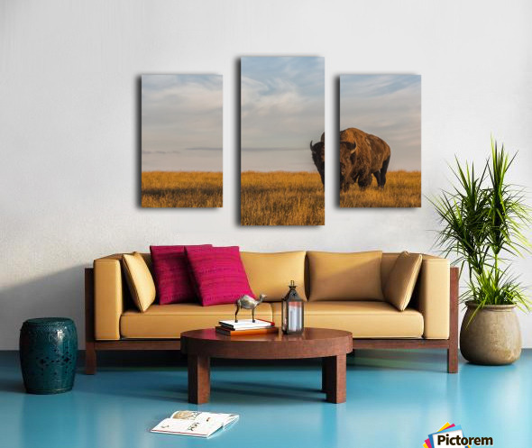 Bison (bison bison), Grasslands National Park; Saskatchewan, Canada Canvas print