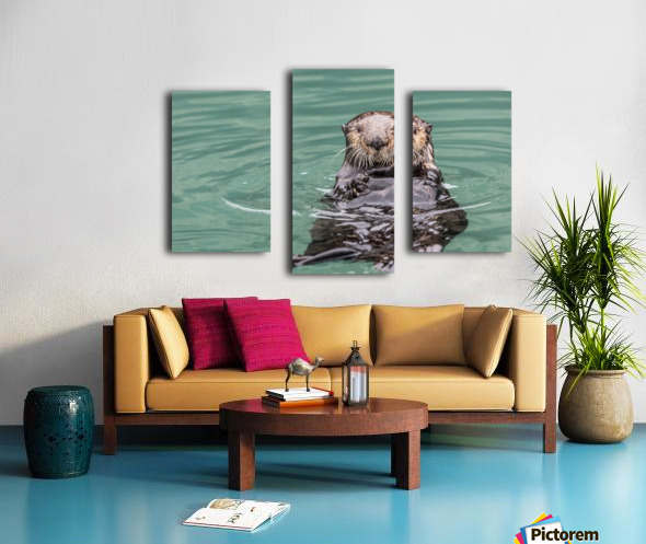 Close-up of a Sea Otter (Enhydra lutris) floating on it's back, looking towards the camera, South-central Alaska; Seward, Alaska, United States of America Canvas print