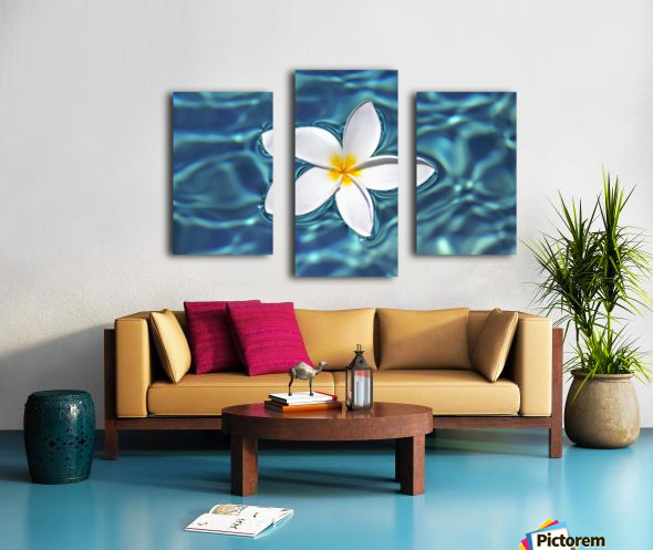 Plumeria flower floating in clear blue water. Canvas print