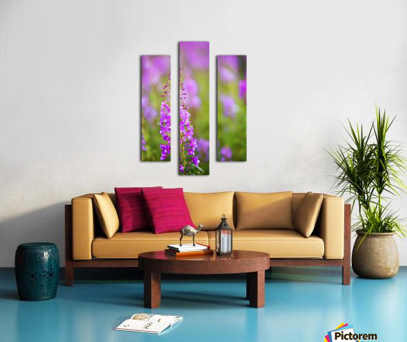 Fireweed Detail Near Anchor Point On The Kenai Peninsula In Southcentral Alaska. Canvas print