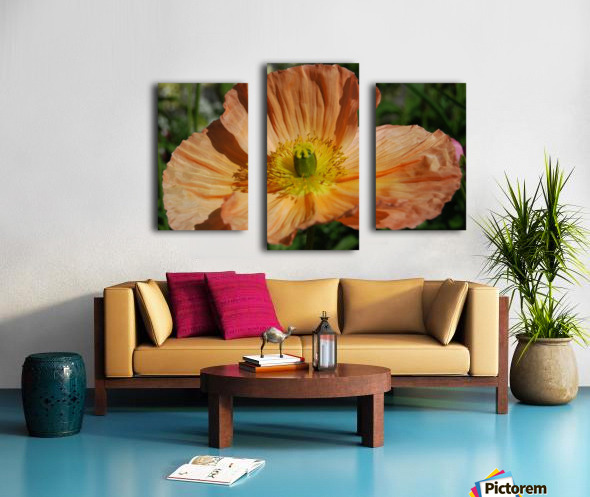 A Poppy Flower Growing Canvas print