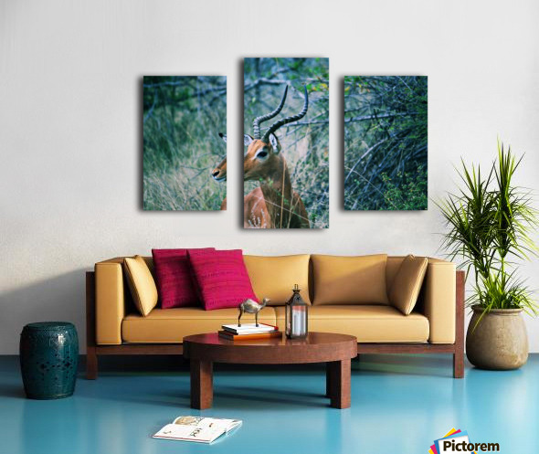 African Game Canvas print