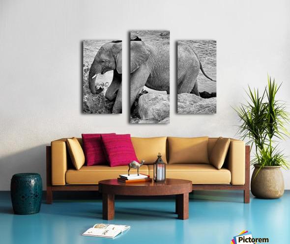 Elephant Baby Canvas print