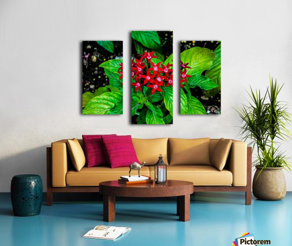 Beauty in the Flower Canvas print