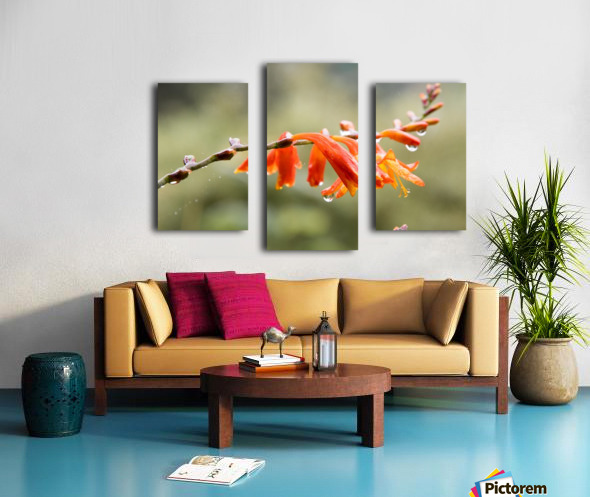 Orange Blooms with droplets Canvas print
