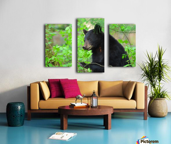3646-Bear Lunch Canvas print