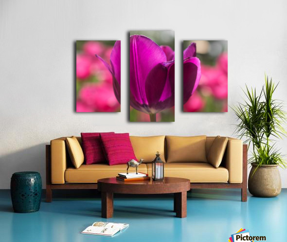 Violet - Violette Canvas print