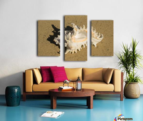 Murex Ramosun Rams Horn Shell Canvas print