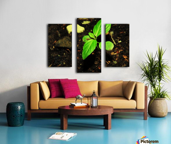 C (11) Canvas print