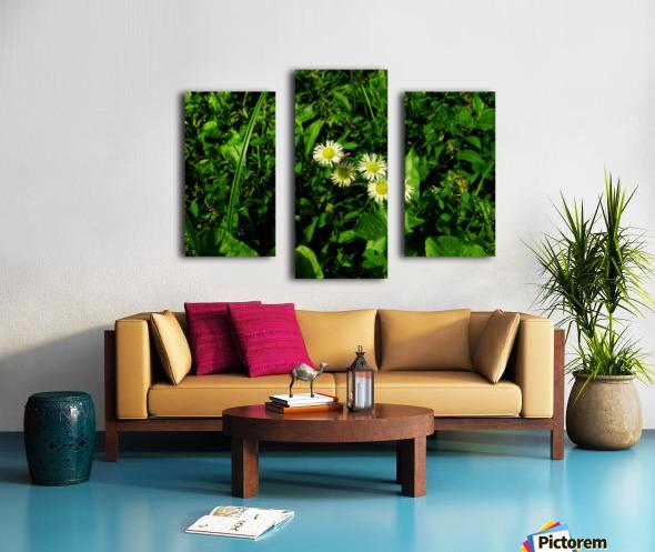 sofn-D38C2562 Canvas print