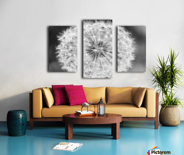 Dandylion black and White Canvas print
