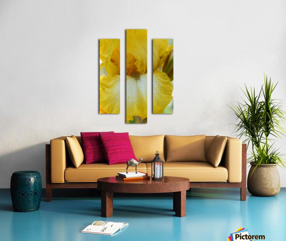 Yellow Iris Photograph Canvas print