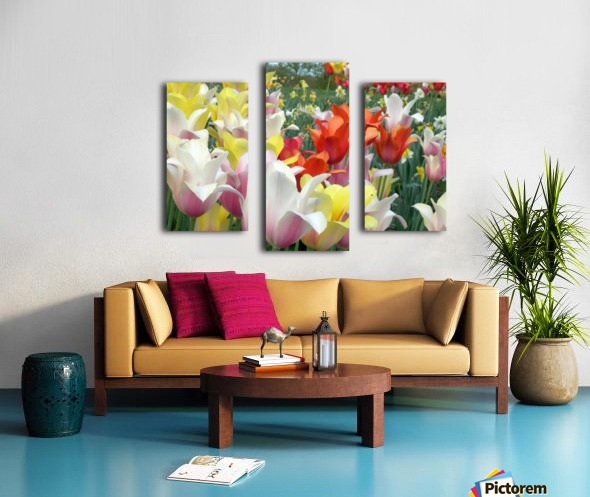 Beautiful Tulip Garden Photograph Canvas print