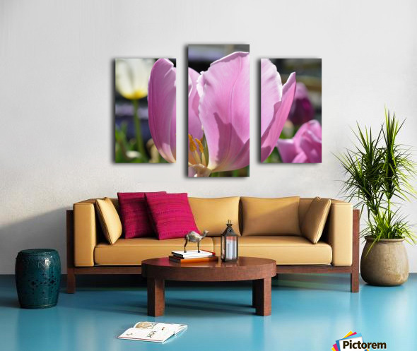 Purple Tulip Photograph Canvas print