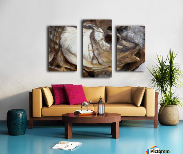 Carp no More Canvas print