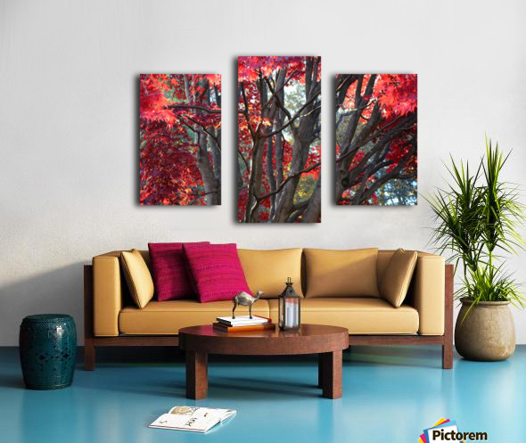 Beautiful Red Fall Foliage Canvas print