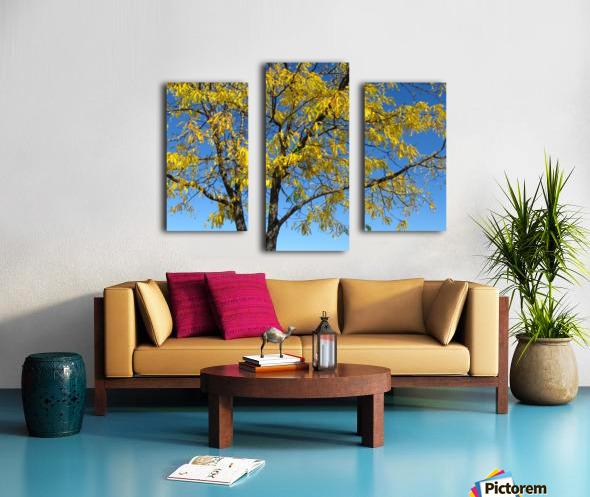 Beautiful Yellow Fall Foliage Canvas print