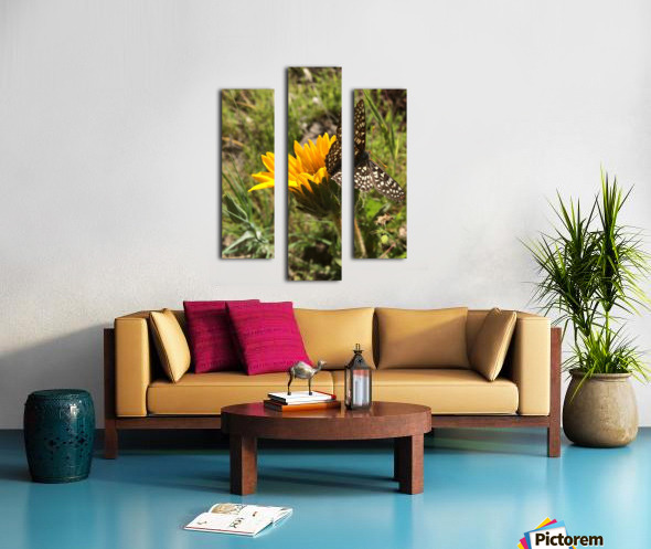 Butterfly on Arrowleaf  Canvas print