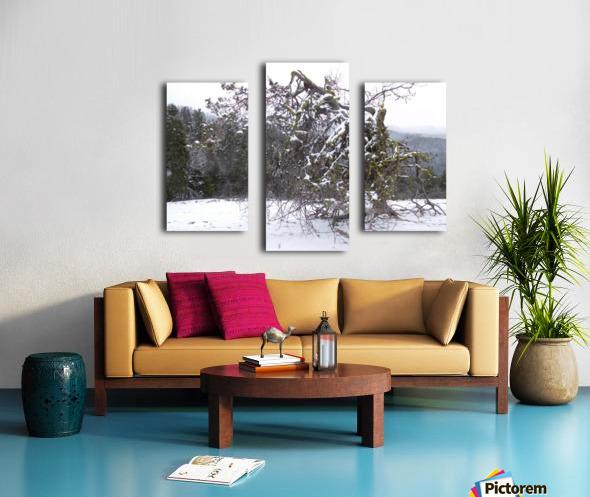 Ancient Mountain Juniper Canvas print