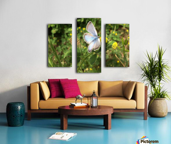 Blue Butterfly on Clover Canvas print