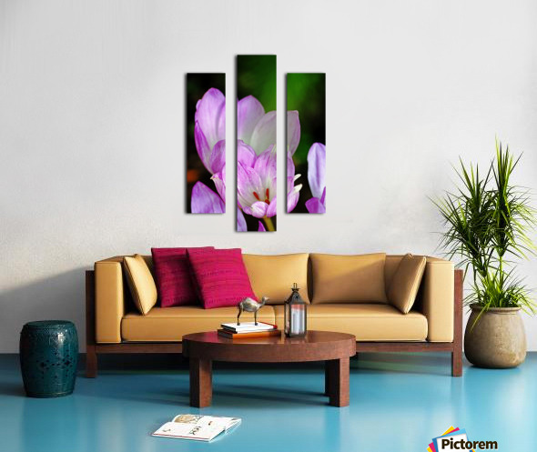 Fall Crocus Canvas print