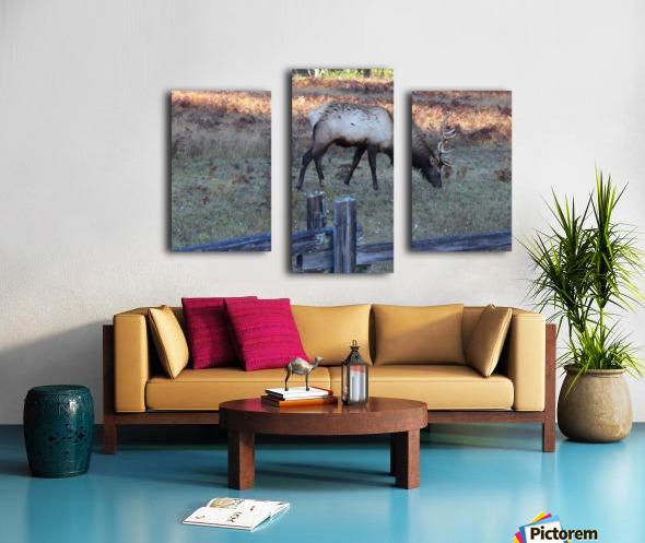 Bowing Elk Canvas print