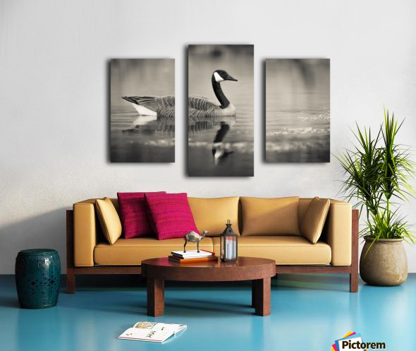 Canada Goose - 2 Canvas print