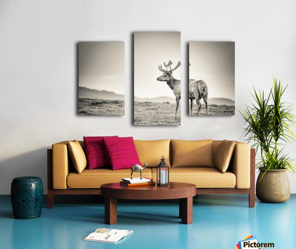 Tule Elk Canvas print
