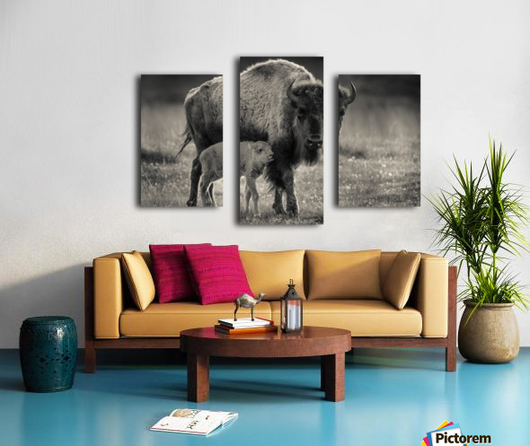 Bison love Canvas print