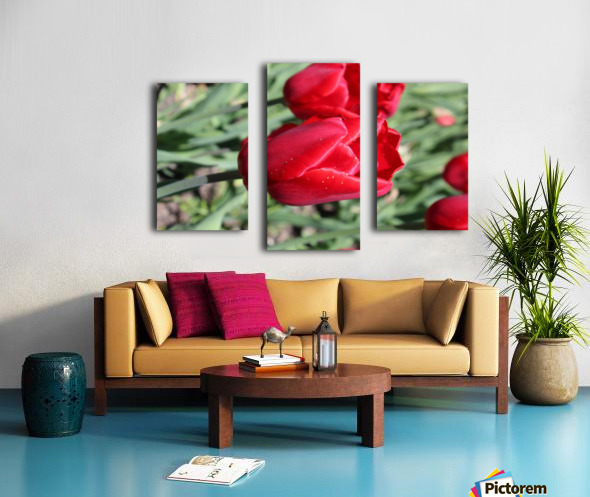 Tulips Red Canvas print
