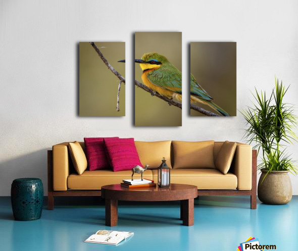 164A1450 Modifier Canvas print