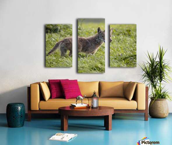 Coyote Pretty Canvas print