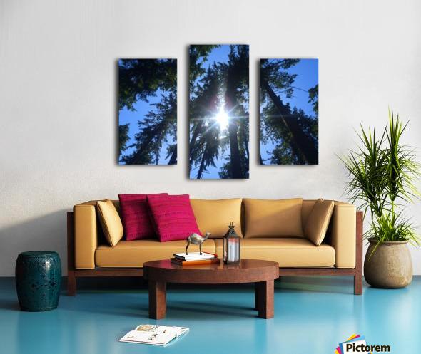 Weyerhaeuser Tree Canvas print