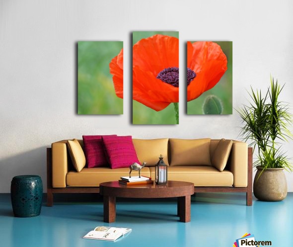 Poppy Red Canvas print
