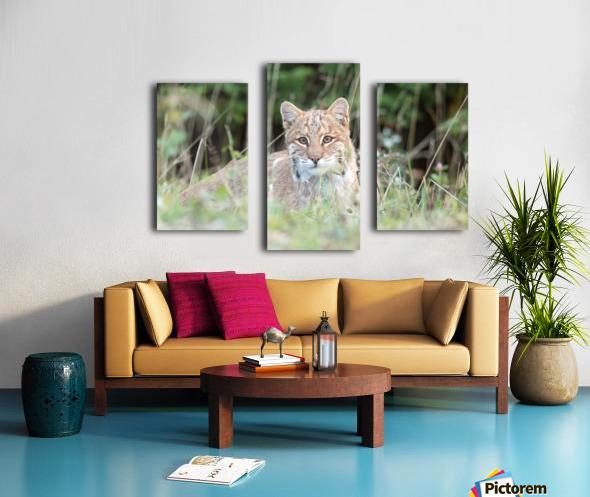 Curious Bobcat Canvas print