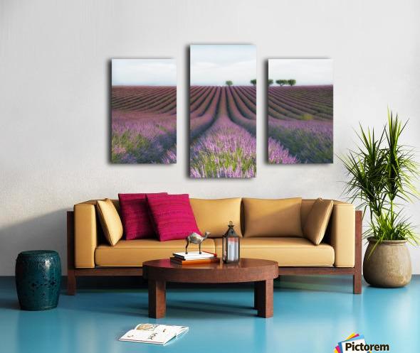 Velours de Lavender Canvas print