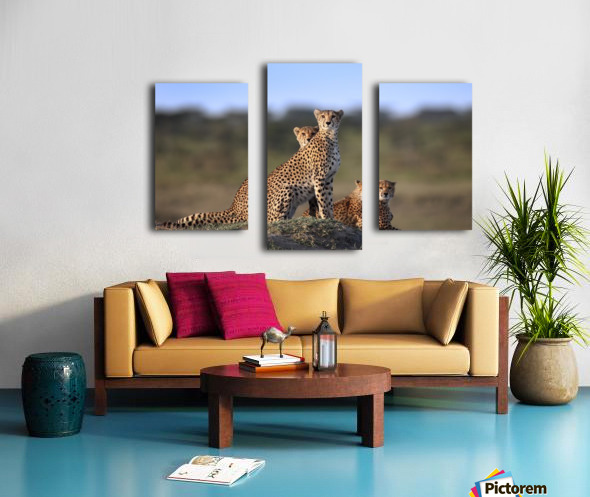 Cheetahs Family Canvas print