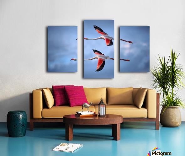 Greater Flamingos Canvas print