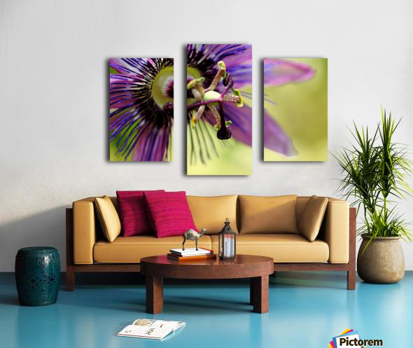 Purple Passion Flower Canvas print