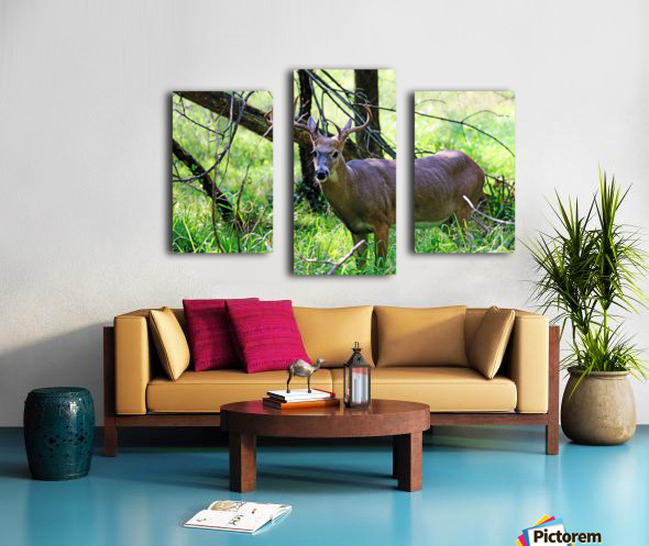 A Buck In The Grass Canvas print
