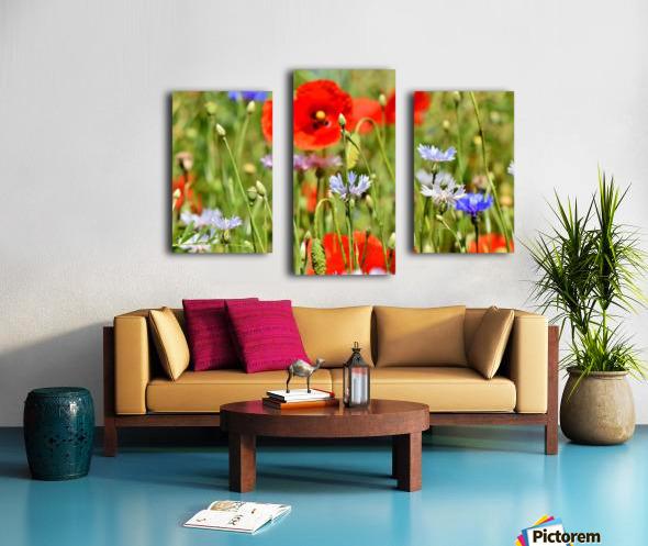alpine cornflower, cornflowers, flowers, centaurea montana, field of flowers, poppy, composites, flora, wild plant, plant, flower garden, wild flower, garden, flower meadow, petal, meadow, nature, Canvas print