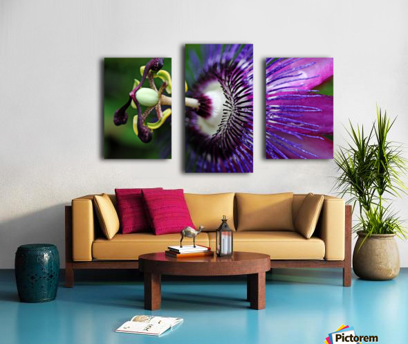 Passion Flower In Purple Canvas print