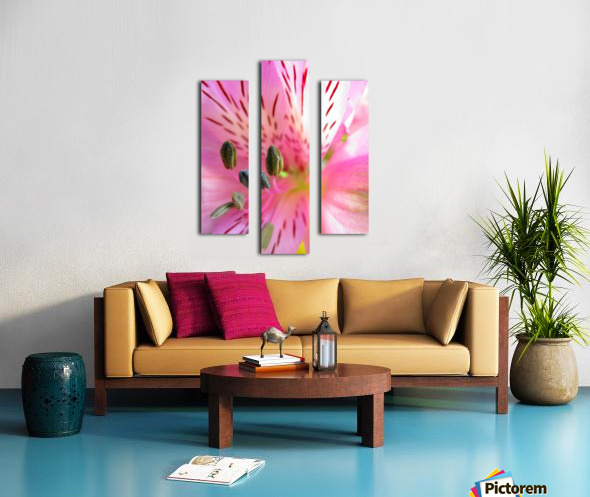 Gentle Pink Canvas print