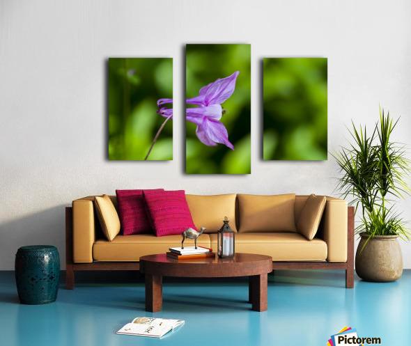 Purple Columbine 2 Canvas print