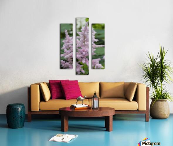 Pink Astilbe 1 Canvas print