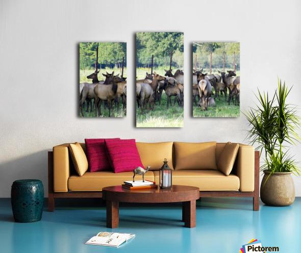 Elk Red Tailed Deer or Wapiti 16 Canvas print