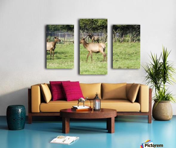 Elk Red Tailed Deer or Wapiti 4 Canvas print