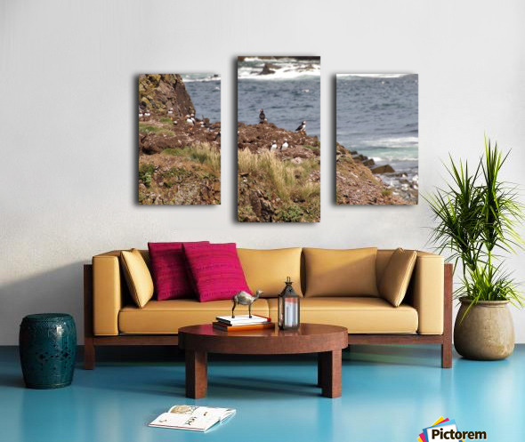 Puffins being puffins 15 Canvas print