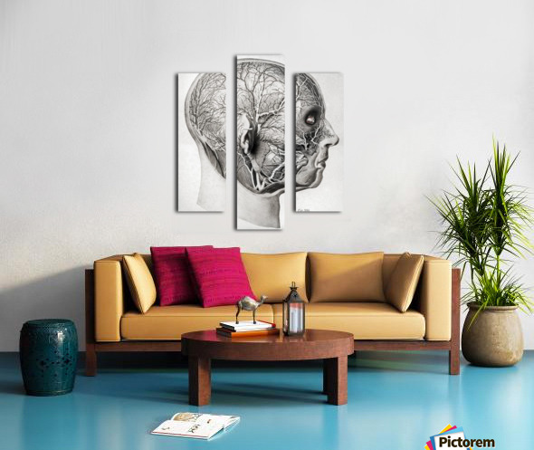 Nerves and Blood Vessels of the Head Canvas print